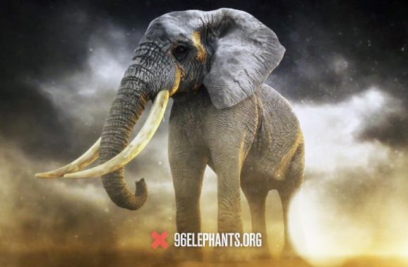 Billy Joel Lends Voice To Save Elephants