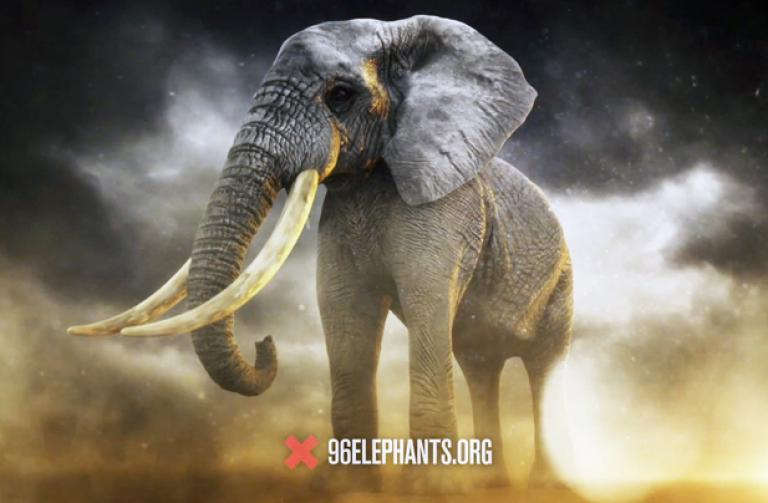 150417_96elephants_hp2