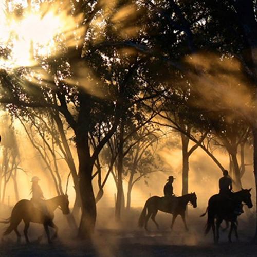 Genieße einen Ausritt mit deinem Pferd