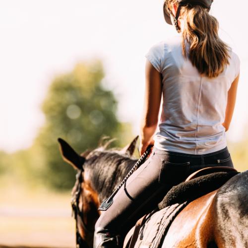Unterhaltung rund um Pferdethemen