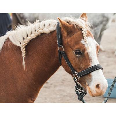 Andalusischer Zopf für das Pferd.