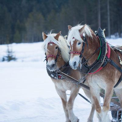 Im Winter Kutsche fahren