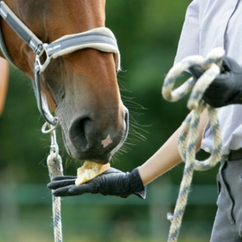 Mache ganz leicht deine eigenen Pferde Leckerli