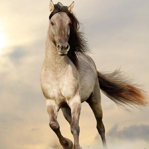 15 Fakten über Pferde