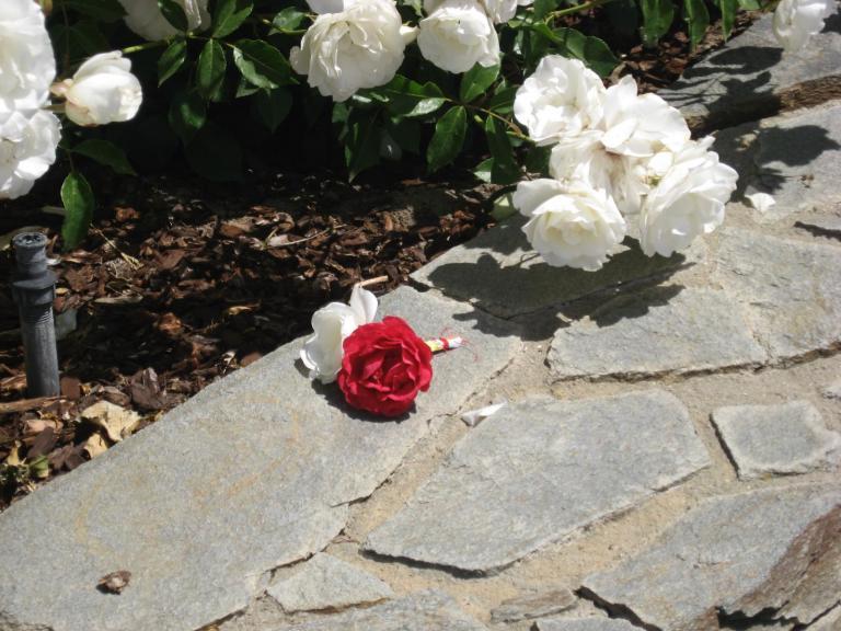 Roses20for20Michael.jpg