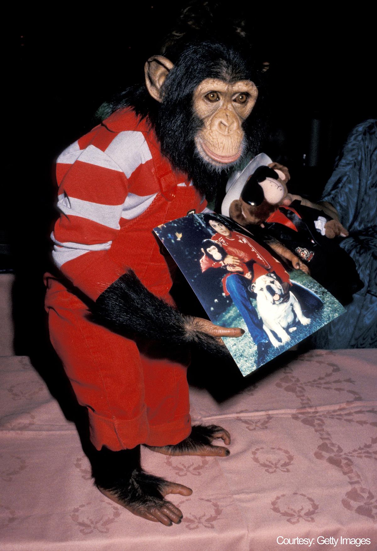 Michael Jackson's Pet Chimpanzee, Bubbles