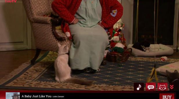 christmas-cats200