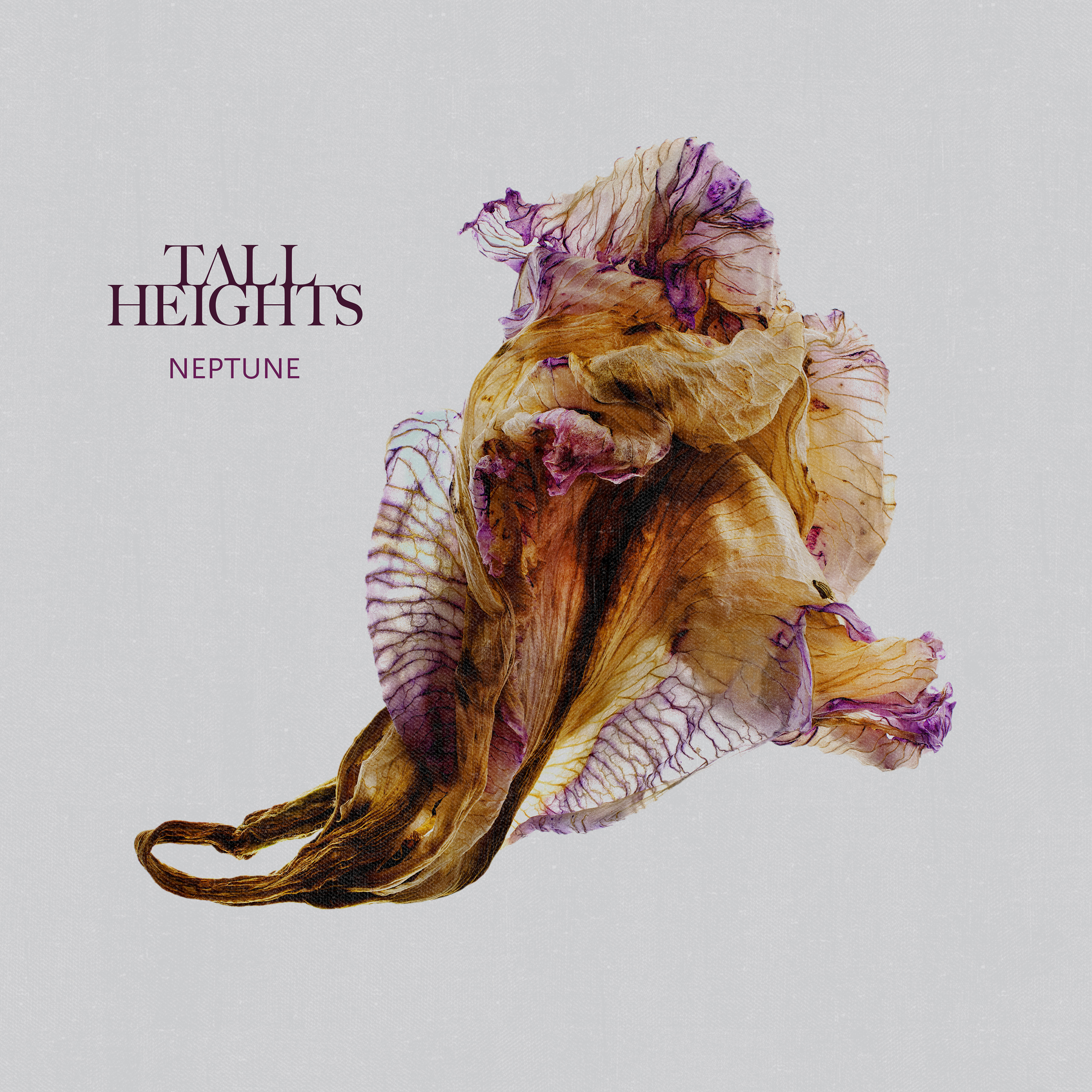 Tall Heights' new album, Neptune, is out now featuring Spirit Cold with over 7 million streams!