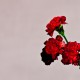 John Legend ujawnia okładkę i tracklistę nowej plyty!